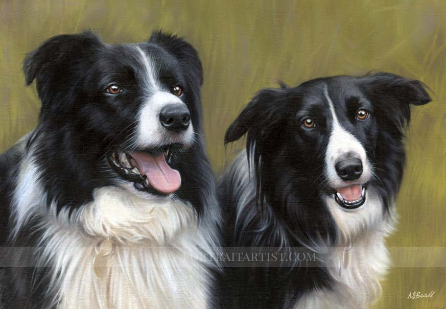 Collie Portraits by Nicholas Beall